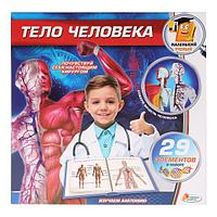 """IV Набор для опытов """"Маленький учёный"""" Тело человека"""