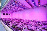 Освещение теплиц, монтаж светового оборудования в теплицы., фото 2