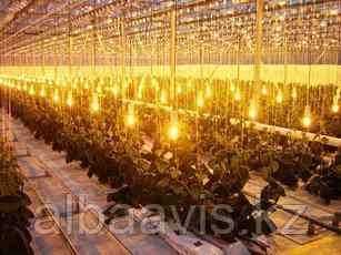 Освещение теплиц, монтаж светового оборудования в теплицы.