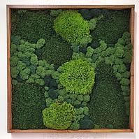 Картина из лесного мха