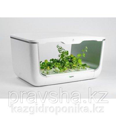 Садовая ферма H-box