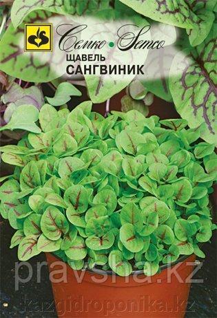 Семена щавель Сангвиник