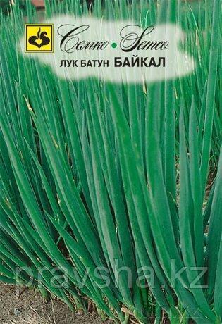 Семена  лук батун Байкал