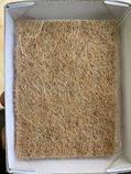 Набор семян для микрозелени: капуста листовая Скарлет, фото 3