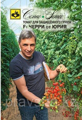 Семена томата Черри от Юрия F1