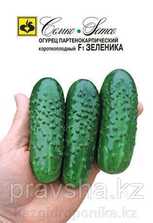 Семена огурца  Зеленика F1