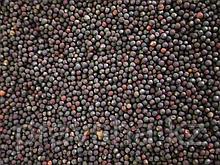 Брюква семена для микрозелени, 100 гр