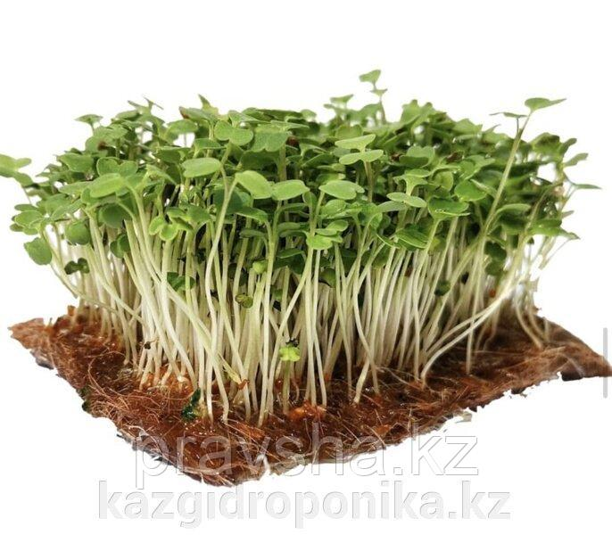 Семена микрозелени Рукола Рококо, 2 гр