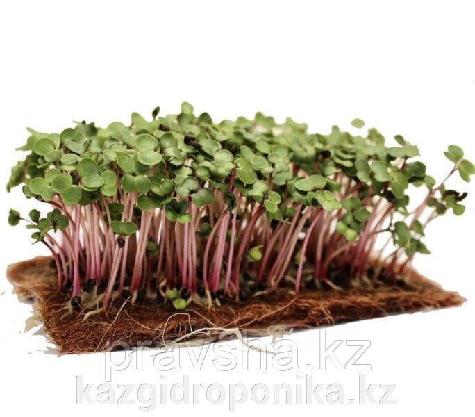 Семена микрозелени капуста листовая Кале (смесь), 2 гр