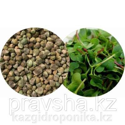 Шпинат Камацуна японский зеленый семена для микрозелени,100г