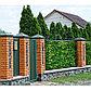 Фотобаннер, 300 × 160 см, с фотопечатью, «Зелёная стена», фото 5
