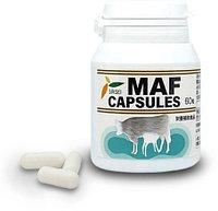 GcMaf в капсулах для повышения иммунитета