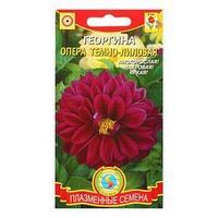 Семена цветов  Георгина 'Опера Тёмно-лиловый', низкорослая, махровая, крупноцветковая (комплект из 10 шт.)