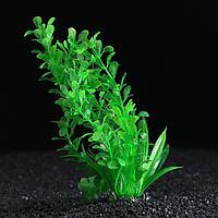 Растение искусственное с распылителем, 14 х 14 х 20 см, фото 1
