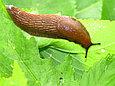 Против муравьев и слизней Gektor Гектор, фото 2