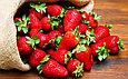 Удобрение для клубники и ягодных Органикмикс, фото 3