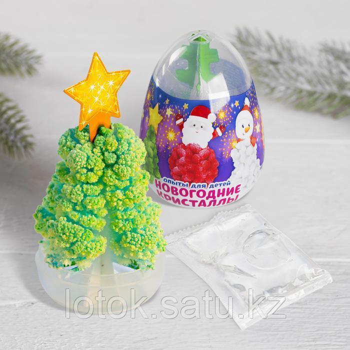 Набор для опытов «Новогодние кристаллы» - фото 2
