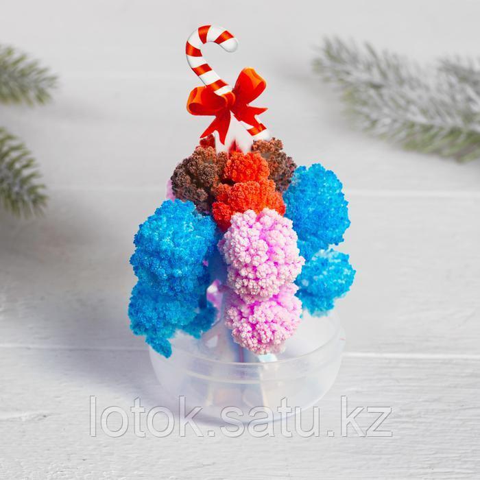 Набор для опытов «Новогодние кристаллы» - фото 3