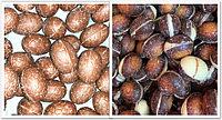 Шоколадные яйца в ассортименте (Без Фантика) 1кг, фото 1