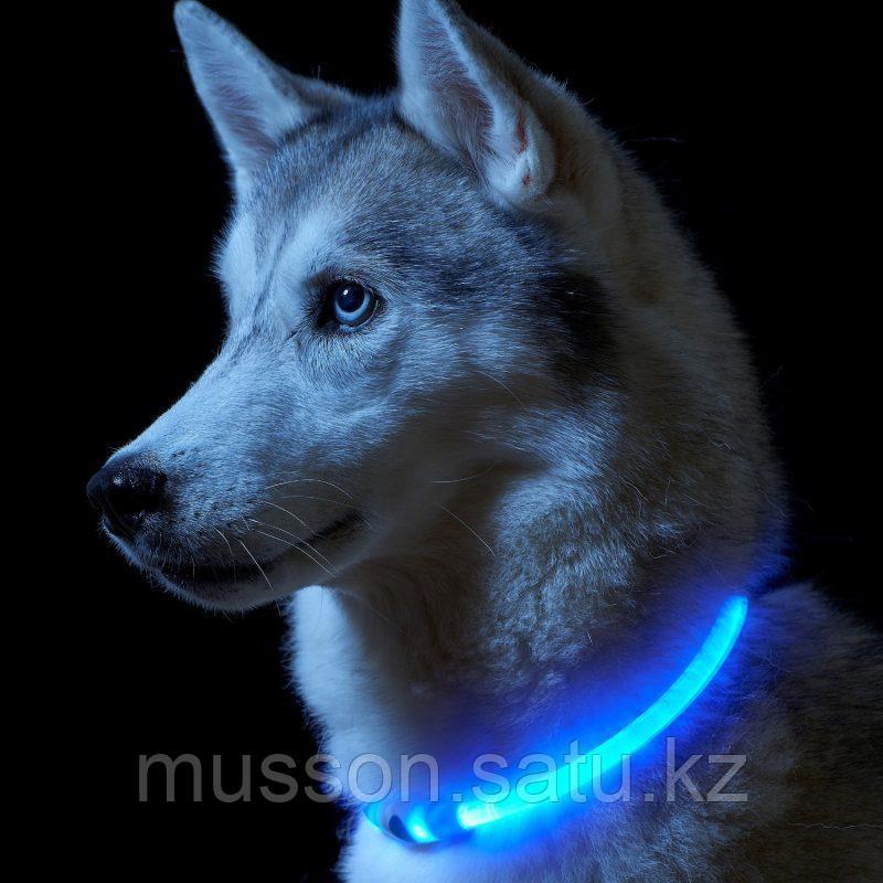 Светодиодный ошейник для собак  размер XS