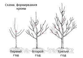 Обрезка плодоягодных растений.