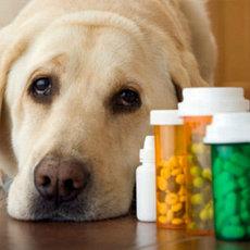 Ветеринарные средства и препараты, общее