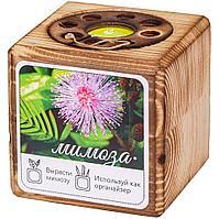 Набор для выращивания с органайзером «Экокуб Burn», мимоза, фото 1