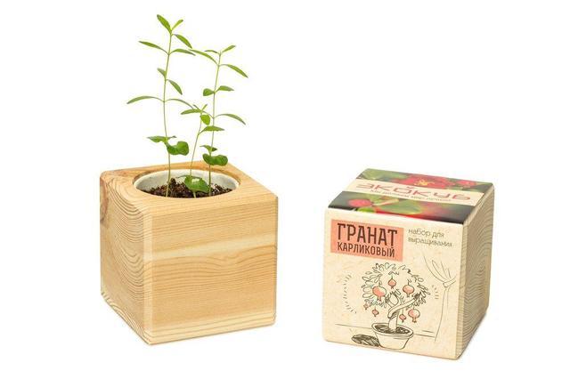 Наборы для выращивания