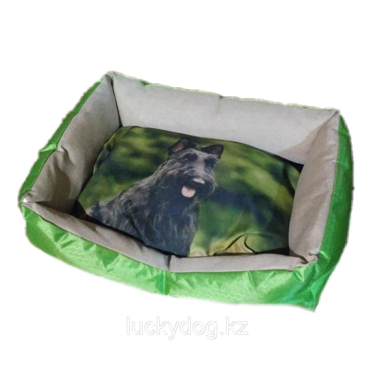 Лежак с рисунком собаки , большой размер .