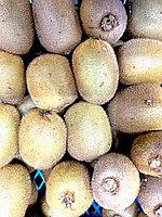 Киви крупный (Иран) 1 кг