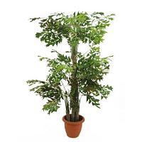 Пальмы PALM TREES 2