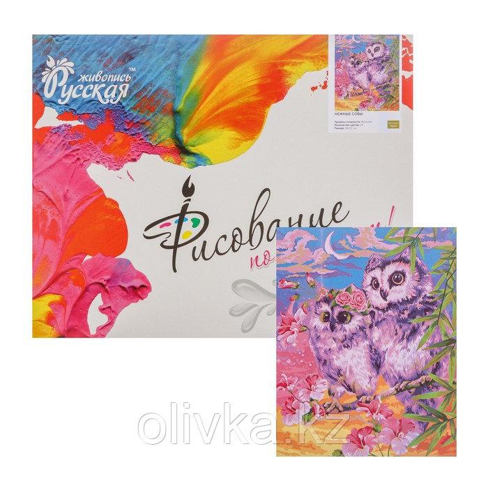 Картина по номерам «Нежные совы» 40 × 50 см