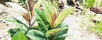 Широколиственные растения - искусственные декоративные растения