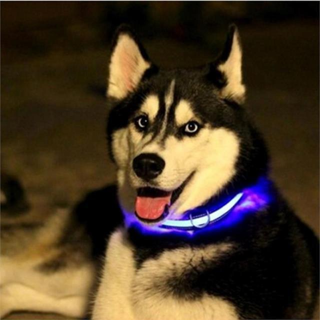 Светодиодный ошейник для собак usb, цвет голубой, размер M Черная Пятница!