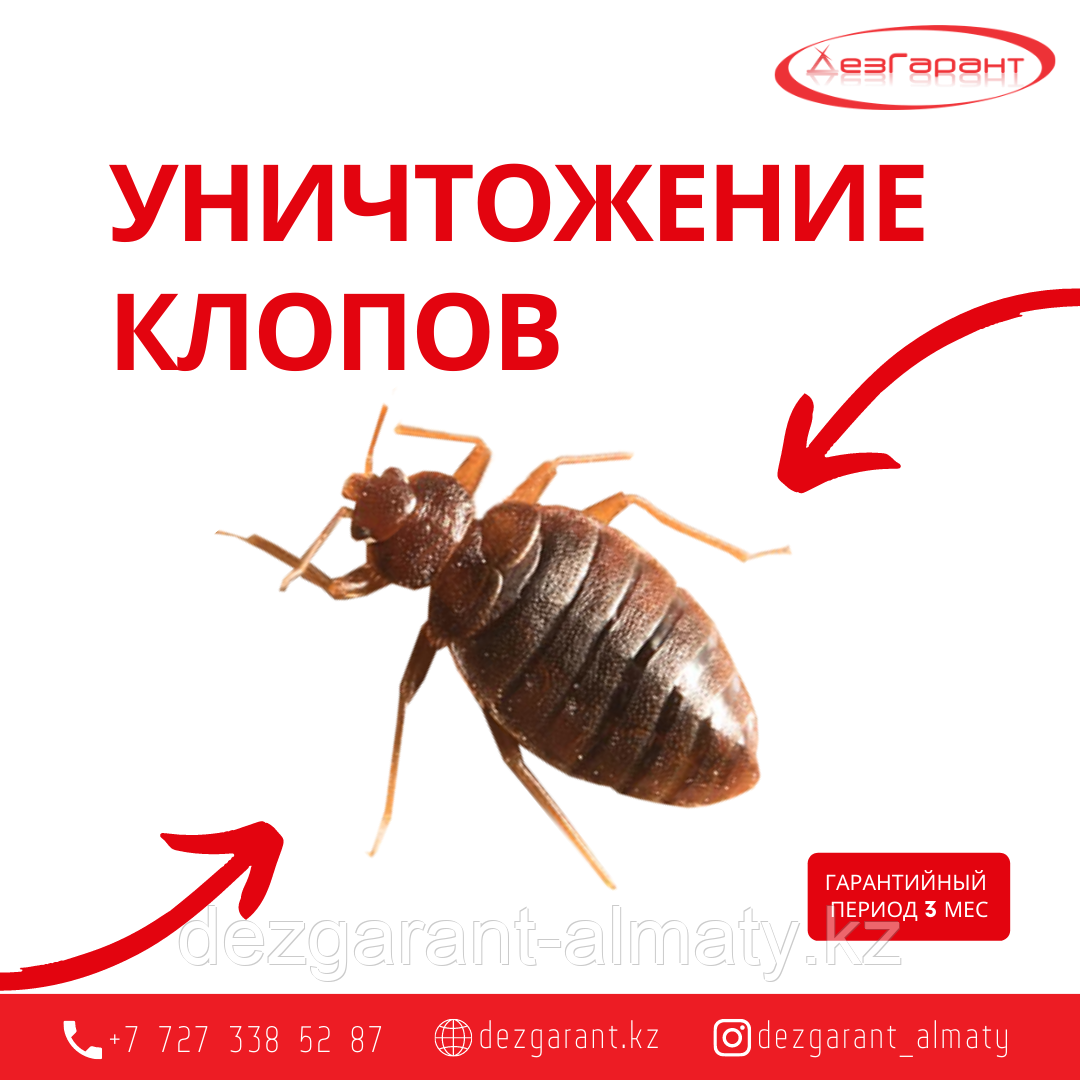 Уничтожение клопов в Алматы