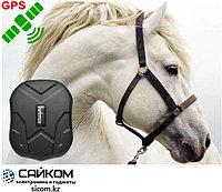GPS Трекер TKStar TK-905 для Лошадей, Зарядка до 60 дней, GPS слежение