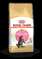 Royal Canin Kitten Maine Coon 36,корм для котят породы Мейн Кун, уп. 4 кг