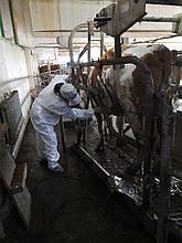 Ветеринарные услуги в животноводстве