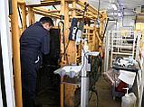 Ветеринарные услуги в животноводстве, фото 2