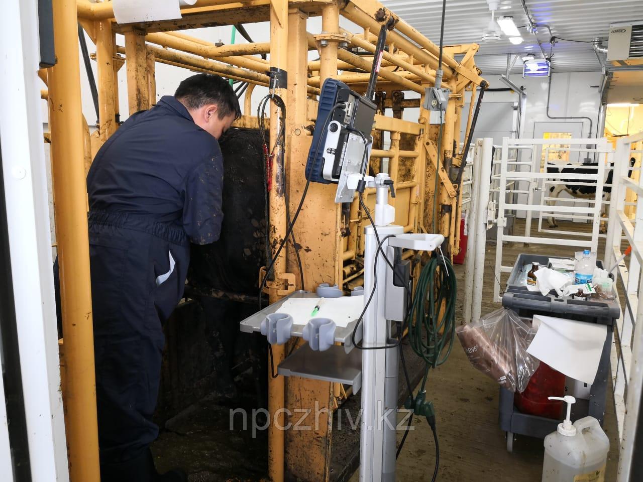 Ветеринарные услуги в животноводстве - фото 2