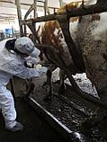 Ветеринарные услуги в животноводстве, фото 3