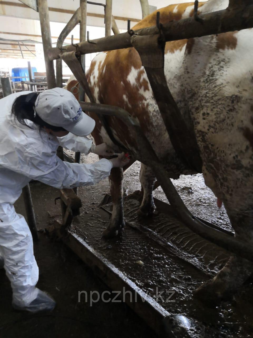 Ветеринарные услуги в животноводстве - фото 3
