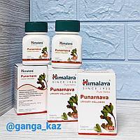 Пунарнава (Punarnava / Himalaya) - для лечения почек и мочеполовой системы, 60 табл