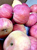 Яблоки сорт Салтанат 1 кг