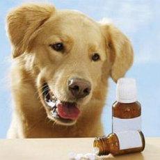 Кортикостероиды для животных