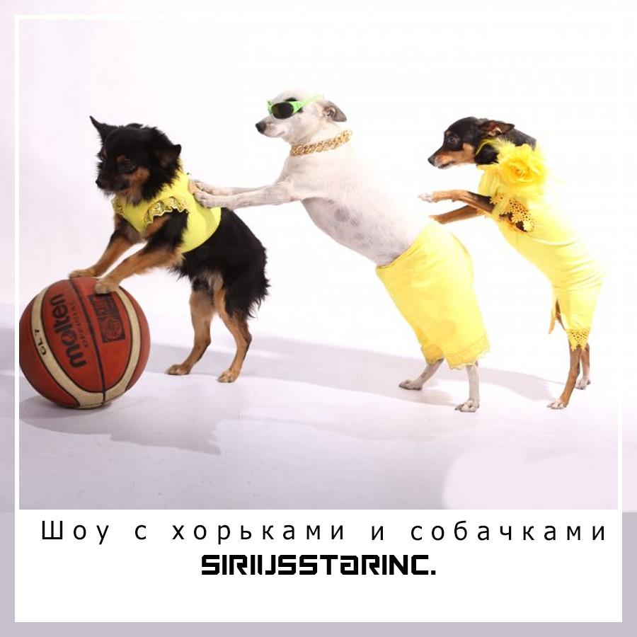 Эксклюзивное шоу с хорьками и собачками