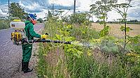 Как бороться с сорняками на земельном участке