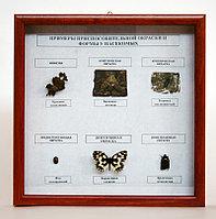 Коллекция Примеры приспособительной окраски и форм у насекомых.