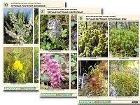 """Комплект раздаточных таблиц по ботанике """"Многообразие растений. Лесные и луговые"""""""