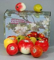 Набор муляжей Дикая форма и культурные сорта яблони